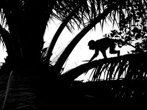 Monkey in a Palm Tree
