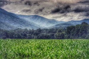 Fields of the Smokies