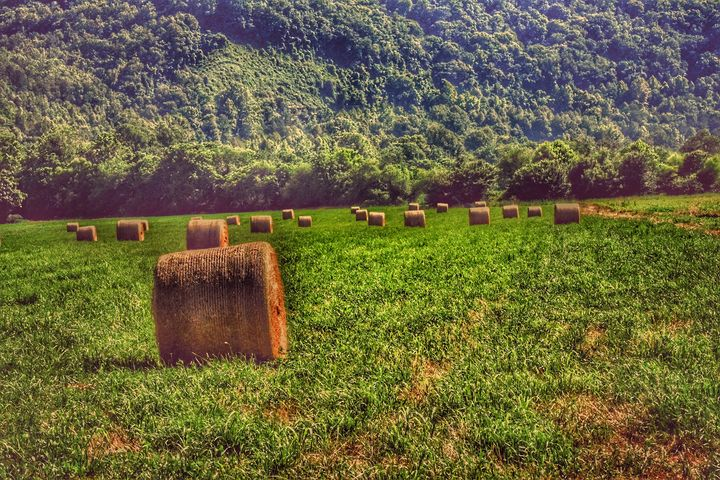 Hay Field - Great Smokies Photos