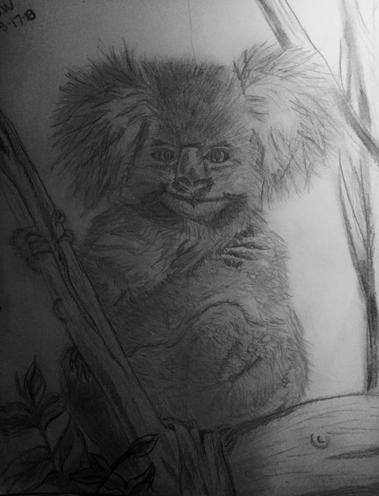 Koala - Color my world art