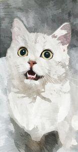 White little cat