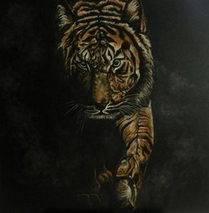 Tiger coming out of the darkness