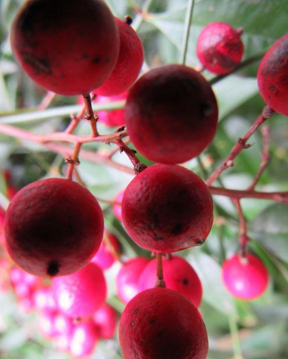 Berries - Kagandahan