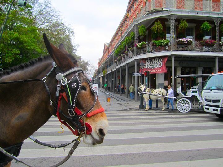 nola horse - Terry Meyers