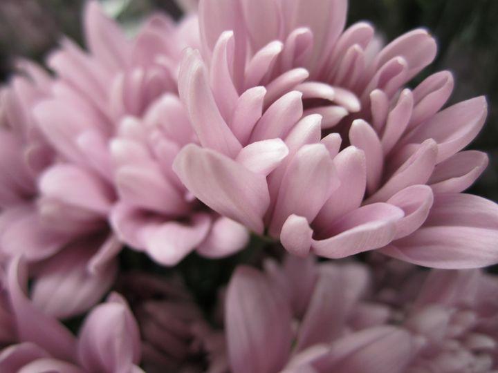 pale purple flowers - Terry Meyers