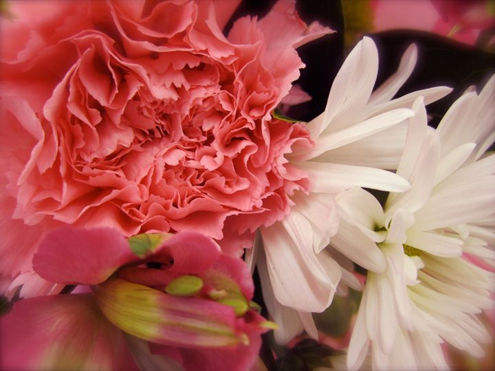 pink carnations and daisies - Terry Meyers