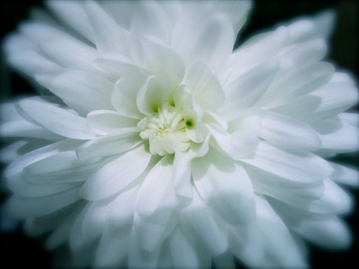 white flower - Terry Meyers
