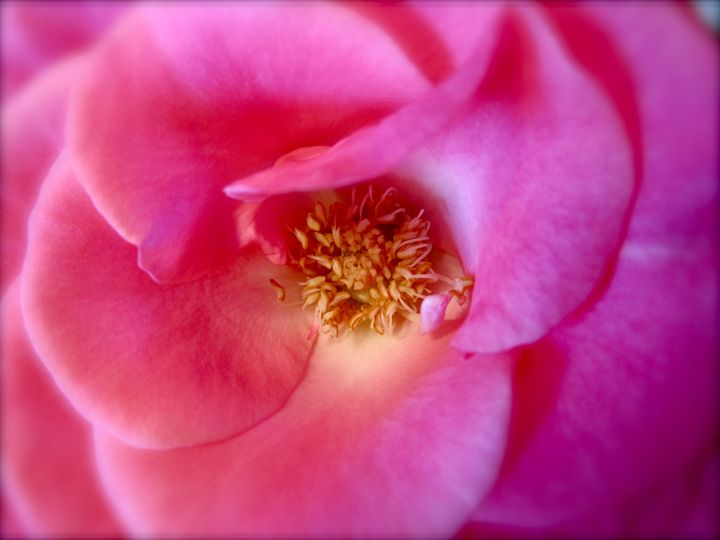 pink flower - Terry Meyers