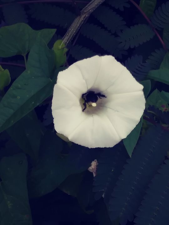 Bee is in there - Nature lover