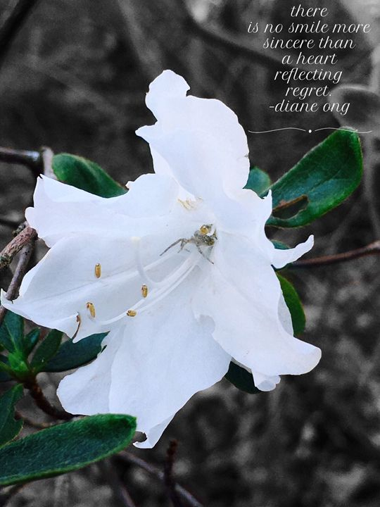20160313-34 Blossoms - Diane Ong