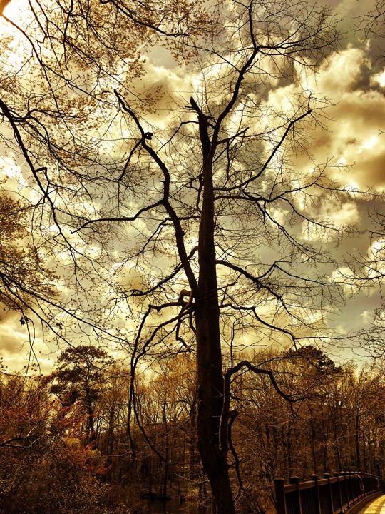 20160324-01 Trees - Diane Ong