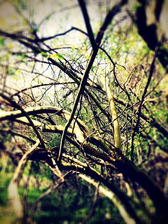 20160324-06 Trees - Diane Ong