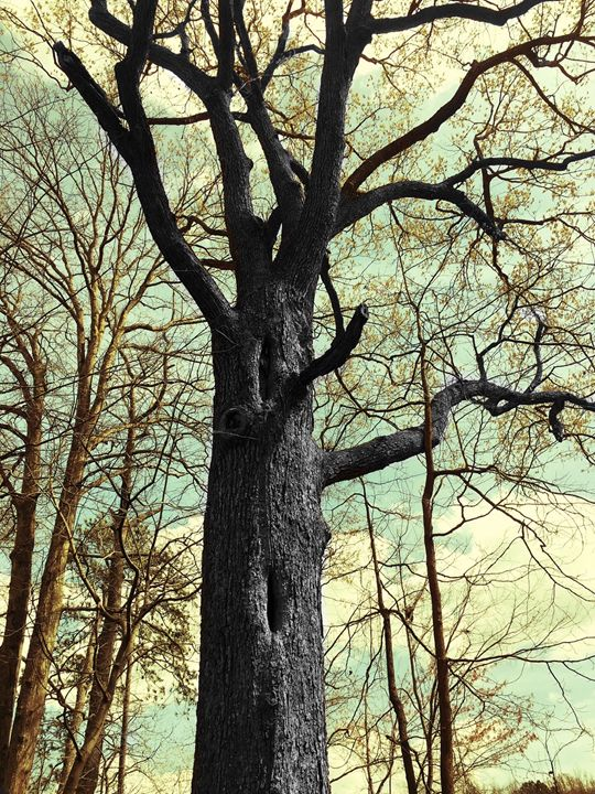 20160324-09 Trees - Diane Ong