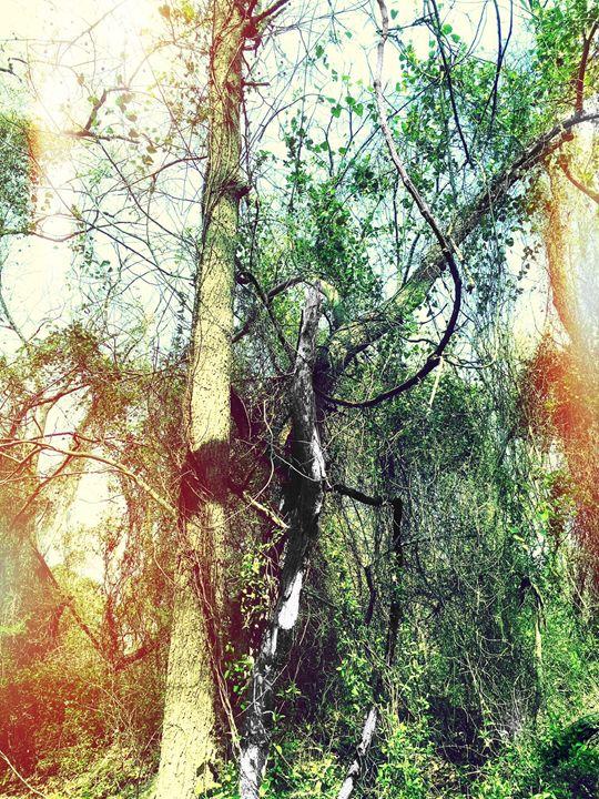 20160324-10 Trees - Diane Ong