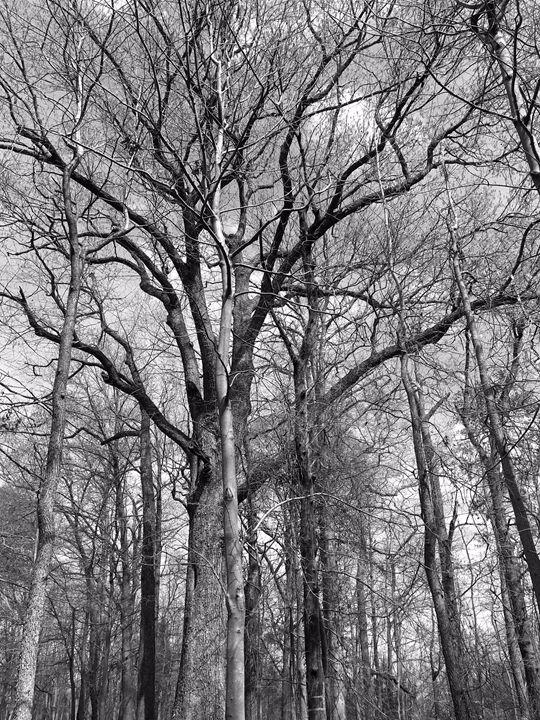 20160324-11 Trees - Diane Ong