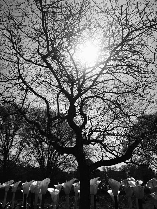 20160324-13 Trees - Diane Ong
