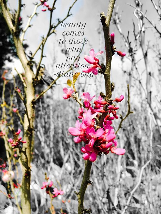 20160313-67 Blossoms - Diane Ong