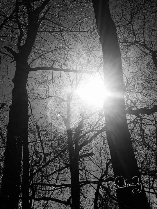 20160324-14 Trees - Diane Ong