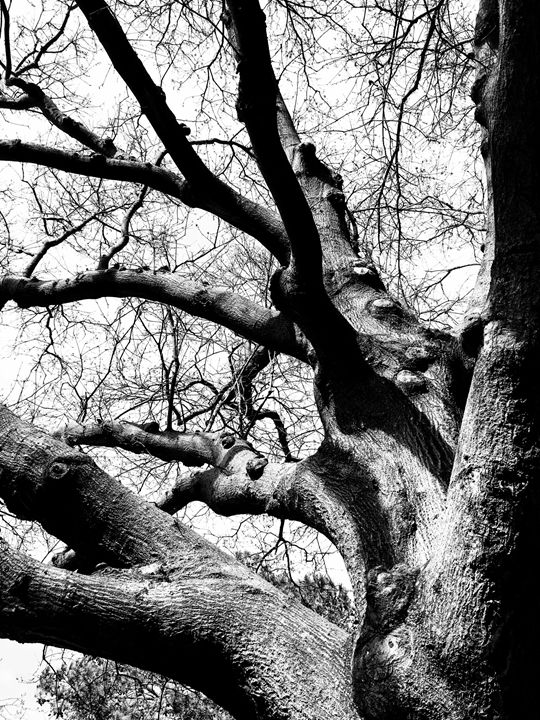 20160324-15 Trees - Diane Ong