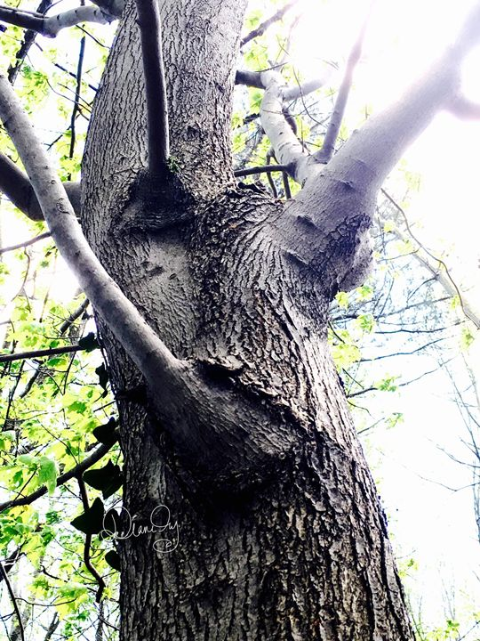 20160324-20 Trees - Diane Ong