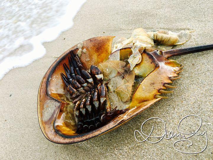 2016-09-22 Sea Giveth 7 - Diane Ong