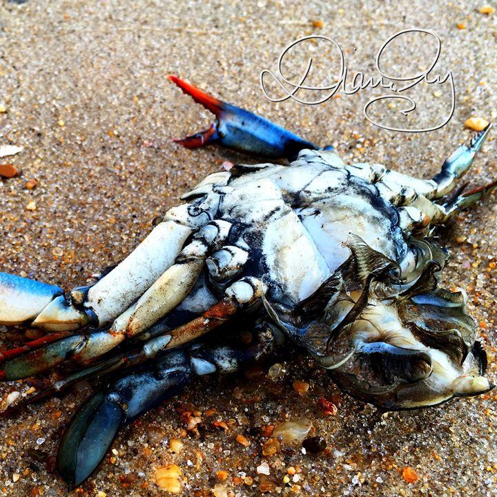 2016-09-22 Sea Giveth 10 - Diane Ong