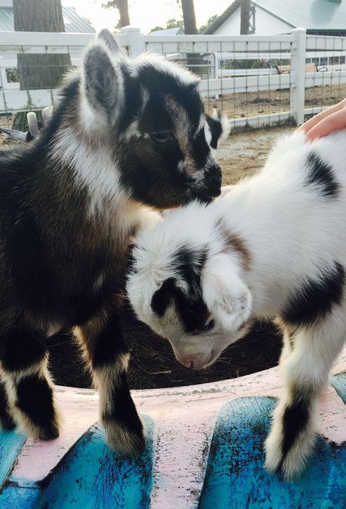 Winter Goats 2016-02 - Diane Ong