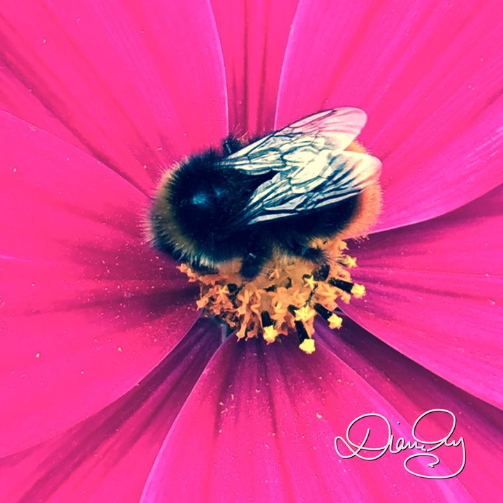 Flower Bee 2 - Diane Ong