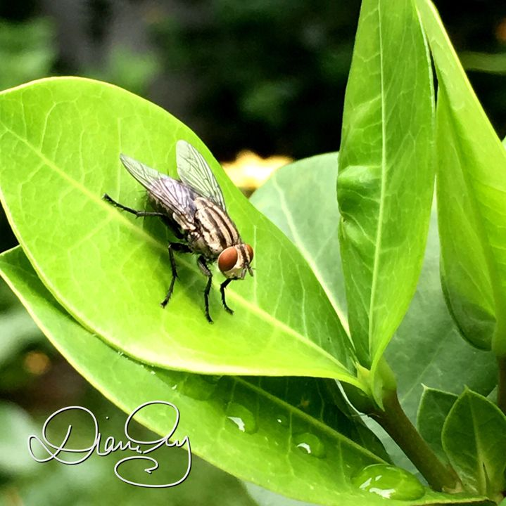 Leaf Fly 1 - Diane Ong