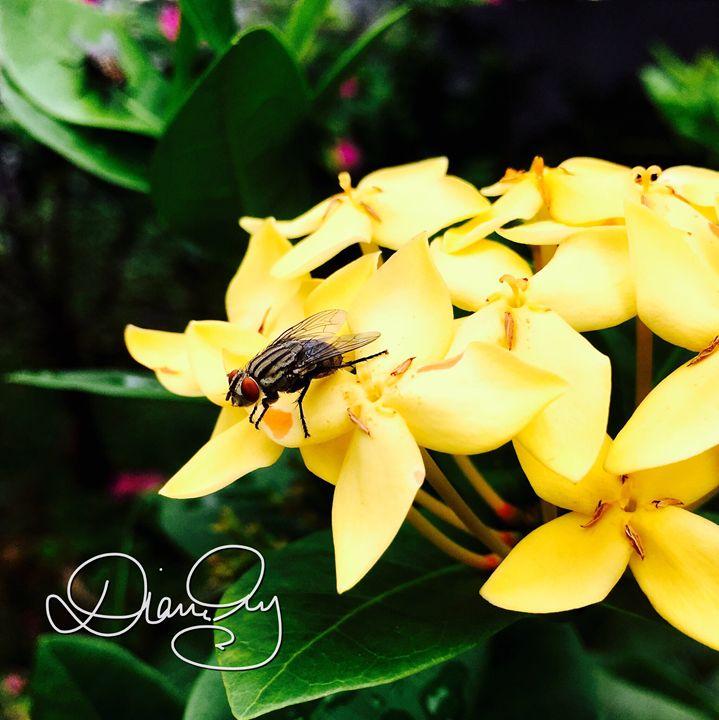 Flower Fly 1 - Diane Ong