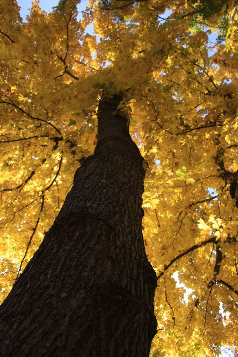 Squirrels View - Cheri Lee Photography