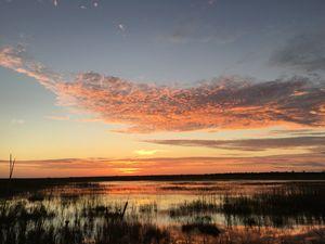 Swampy Sunset - Jimmy G