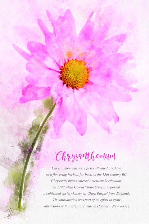 Chrysanthemum - Theodor Decker