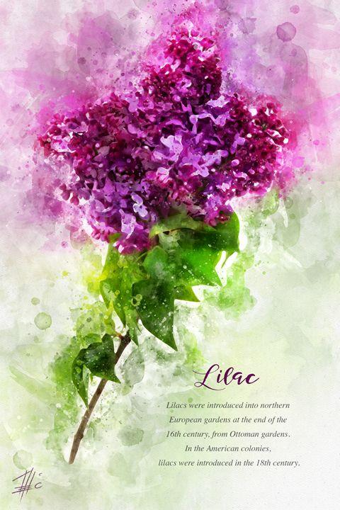 Lilac - Theodor Decker