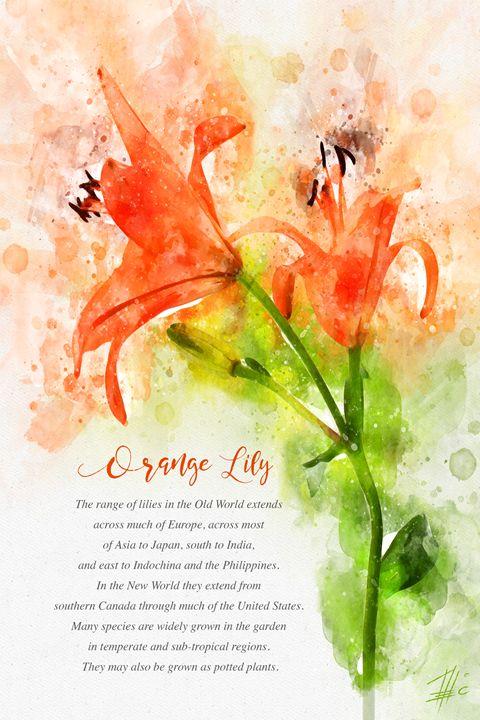 Orange Lily - Theodor Decker