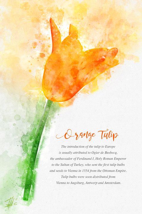 Orange Tulip - Theodor Decker