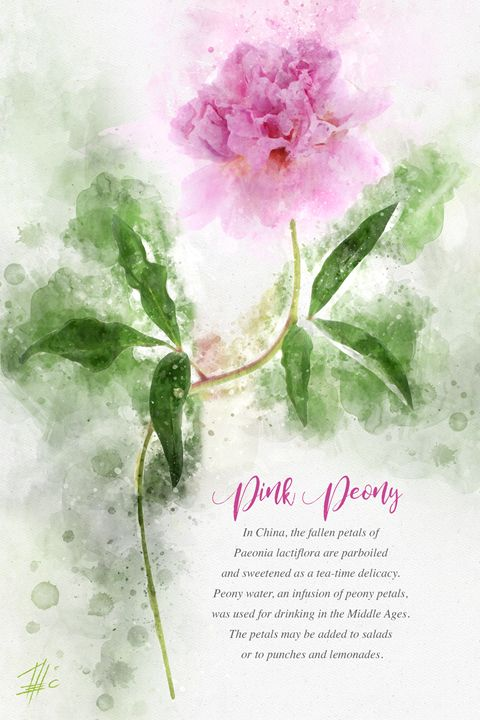 Pink Peony - Theodor Decker