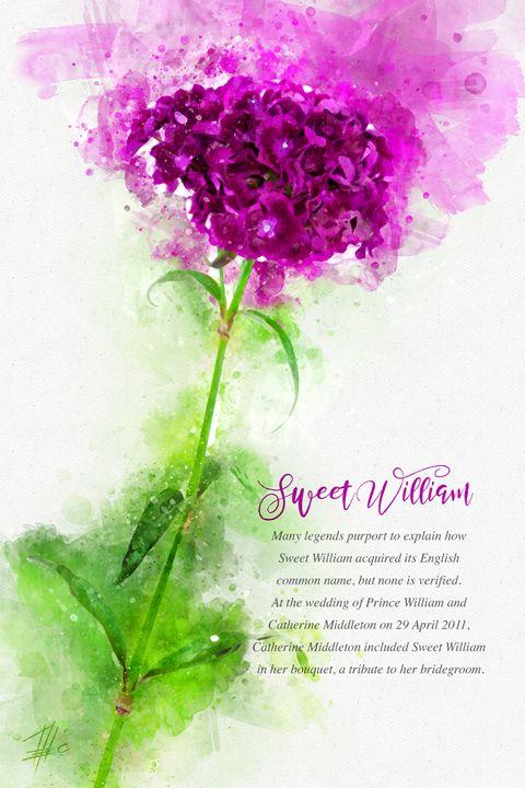 Sweet William - Theodor Decker