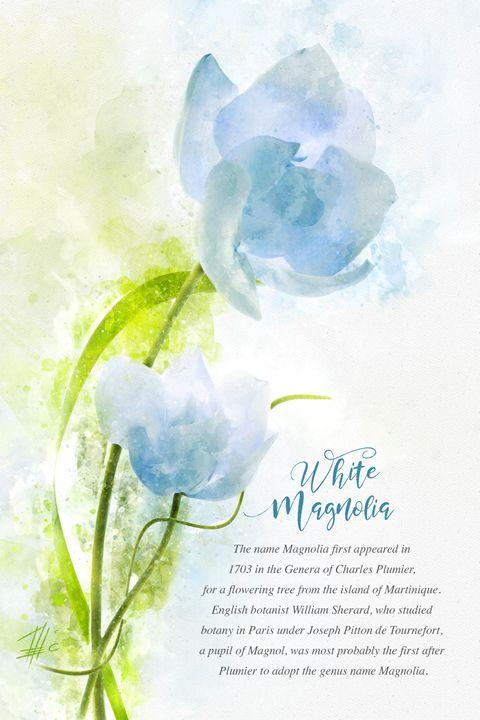 White Magnolia - Theodor Decker