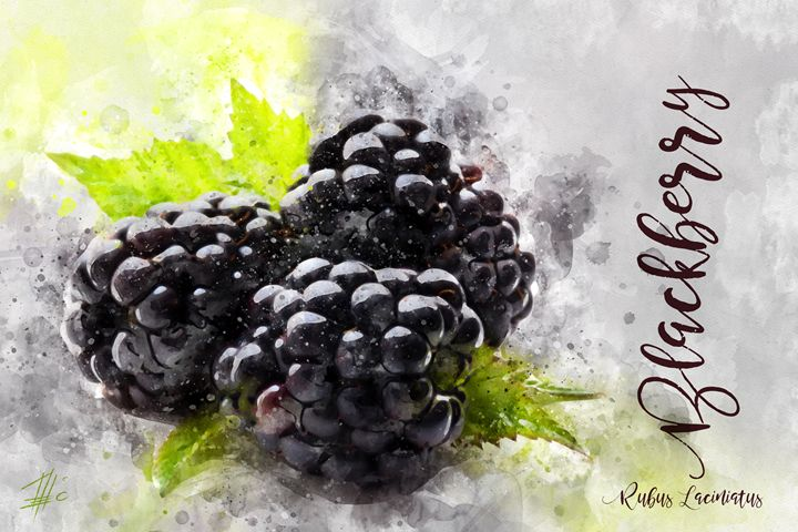 Blackberry - Theodor Decker