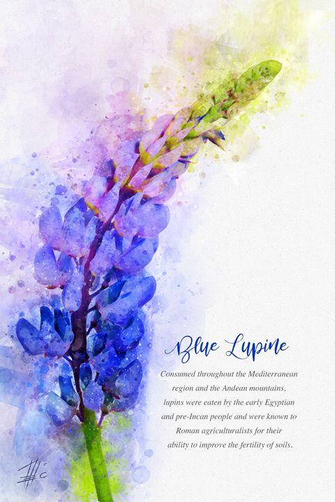 Blue Lupine - Theodor Decker