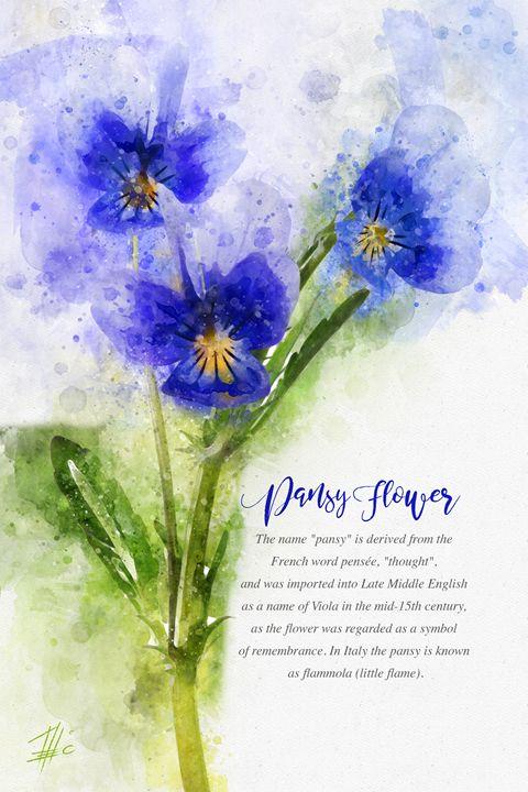 Pansy Flower - Theodor Decker