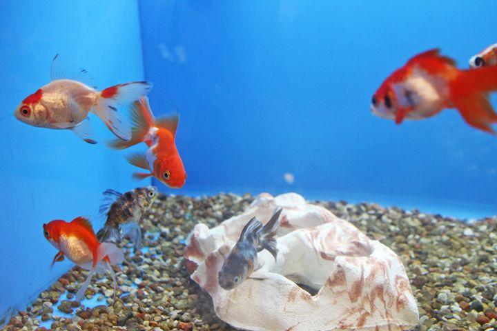 Petco Fish - TMphotographyBaltimore