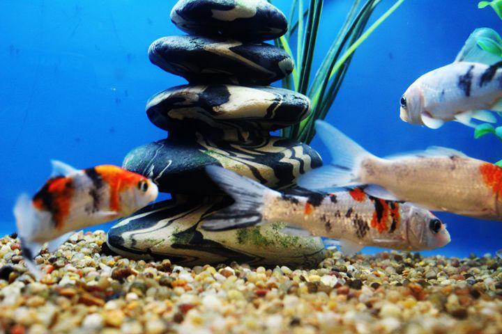 Petco Fish Island - TMphotographyBaltimore