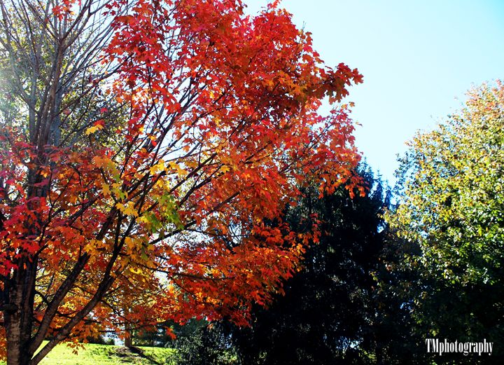 Fall Flowers and Beauty - TMphotographyBaltimore