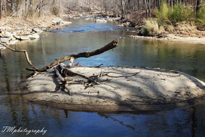 Broken Branch in Patapsaco River - TMphotographyBaltimore