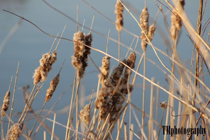 Spring Up Close - TMphotographyBaltimore