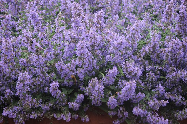 Purple Flowers - TMphotographyBaltimore