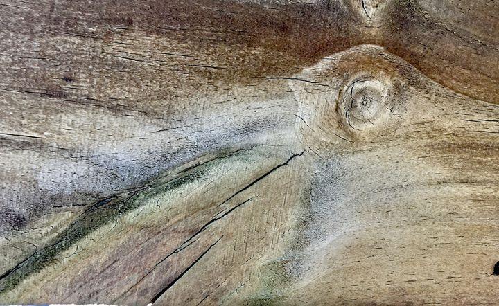 Humming Bird - My Linh O'Quinn