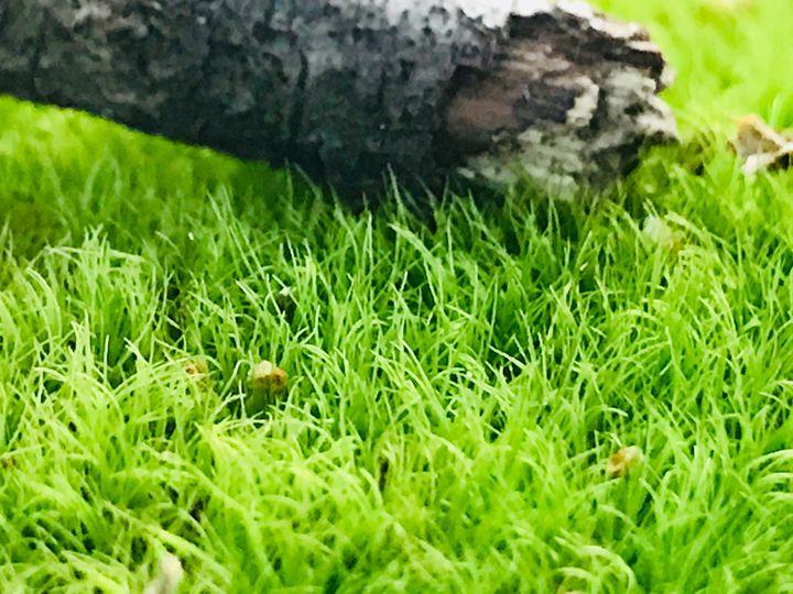 Fresh Grass - My Linh O'Quinn